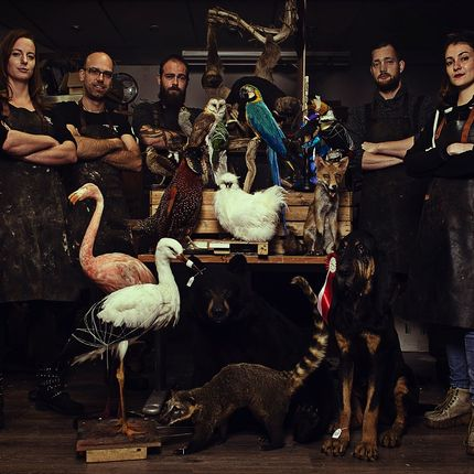 Objets de décoration - Taxidermy & Wildlife Artist - DMW.NU: TAXIDERMY & INTERIOR
