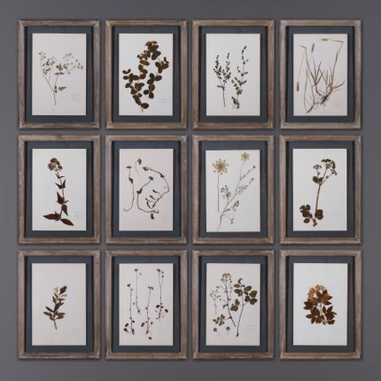 Wall decoration - Set of 12 Framed Old Herbs - ATELIERS C&S DAVOY
