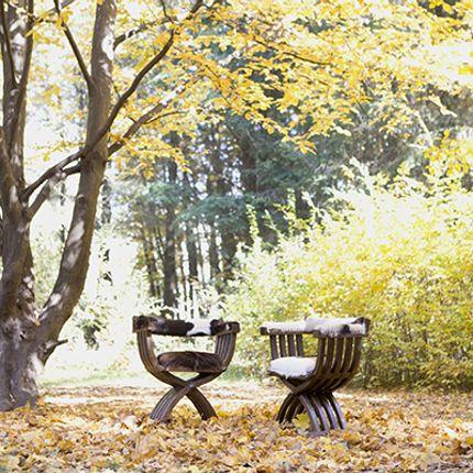 Armchairs - Chair Wild - HYGGE DESIGN