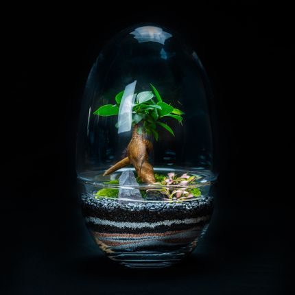 Objets design - KIPLING terrarium  - JUNGLE GLASS