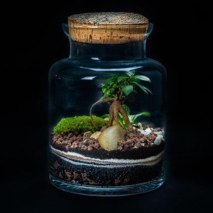 Design objects - WALLACE MEDIUM - JUNGLE GLASS