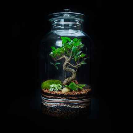 Objets design - DARWIN KING terrarium  - JUNGLE GLASS