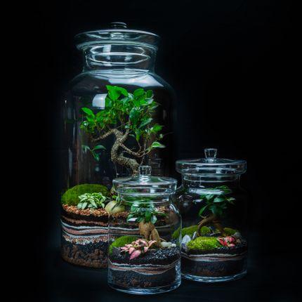 Design objects - DARWIN LARGE - JUNGLE GLASS