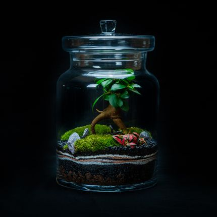 Objets design - DARWIN LARGE terrarium  - JUNGLE GLASS