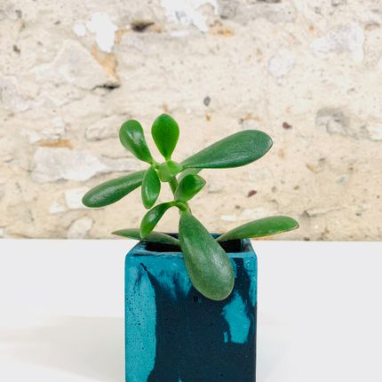 Decorative objects - Succulent pots made of marbled concrete - JUNNY
