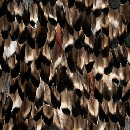 Wall coverings - Folie Feathers - KOKET
