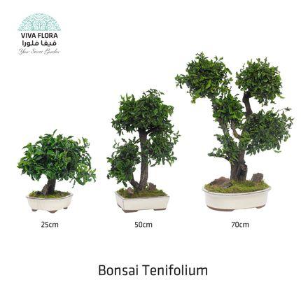 Decorative objects - Bonsai Tenifolium - VIVA FLORA