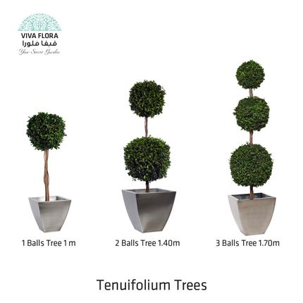 Design objects - Tenuifolium Trees (Balls) - VIVA FLORA