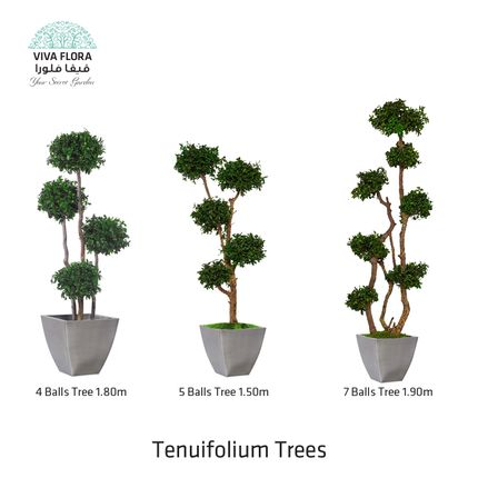 Objets de décoration - Tenuifolium Trees - VIVA FLORA