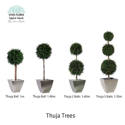 Decorative objects - Thuja Trees (Balls) - VIVA FLORA