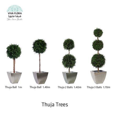 Objets de décoration - Thuja Trees (Balls) - VIVA FLORA