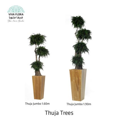 Decorative objects - Thuja Trees Jumbo - VIVA FLORA