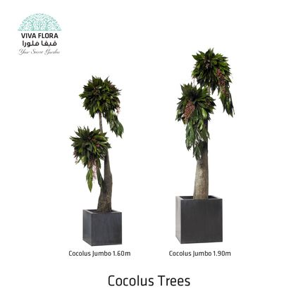 Design objects - Cocolus Trees - VIVA FLORA