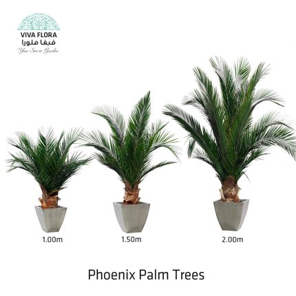 Decorative objects - Phoenix Palm Trees - VIVA FLORA