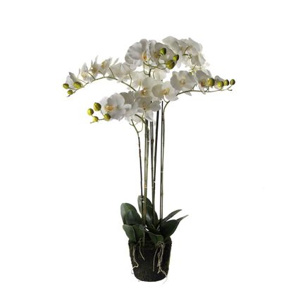 Floral decoration - Orchids XL - ASIATIDES