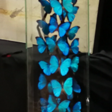 Decorative objects - Flight of Morpho butterfly - METAMORPHOSES