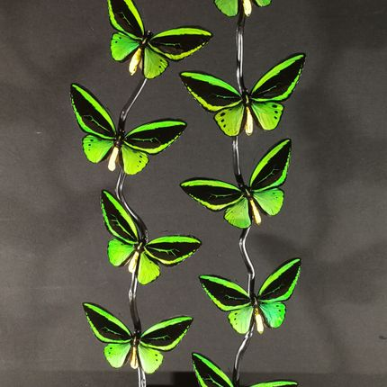Decorative objects - Butterfly Cage Priamus - METAMORPHOSES