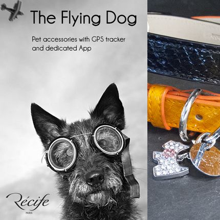 Pet accessories - The Flying Pet - RECIFE