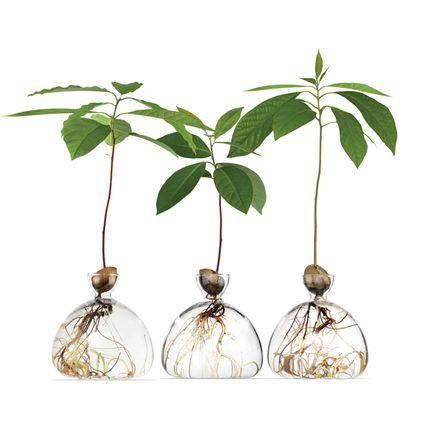 Vases - Avocado Vase - ILEX STUDIO