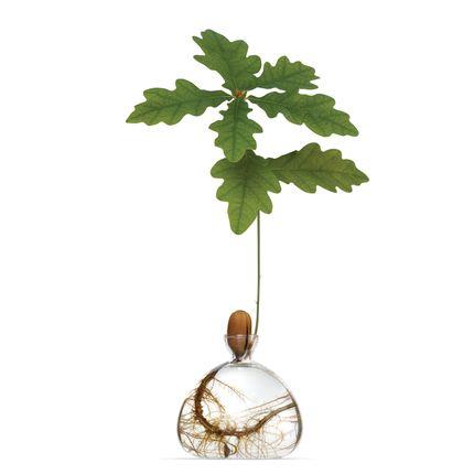 Vases - Acorn Vase - ILEX STUDIO