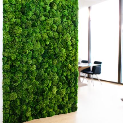 Acoustic solutions - Custom made provence moss walls  - GREEN MOOD