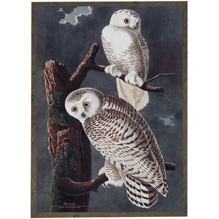 Poster - Birds - KOUSTRUP & CO