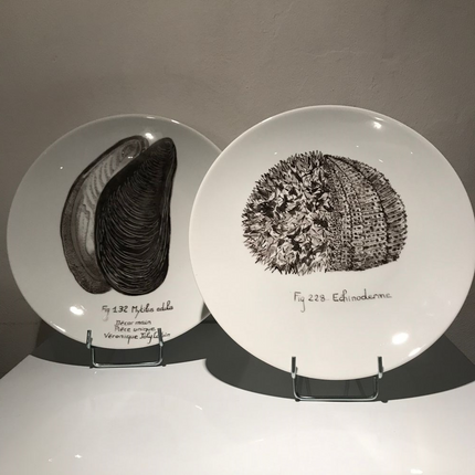 "Wall decoration - Plates illustrated ""URCHIN"" and ""MOULD"" Collection ""MER"" - VERONIQUE JOLY CORBIN"