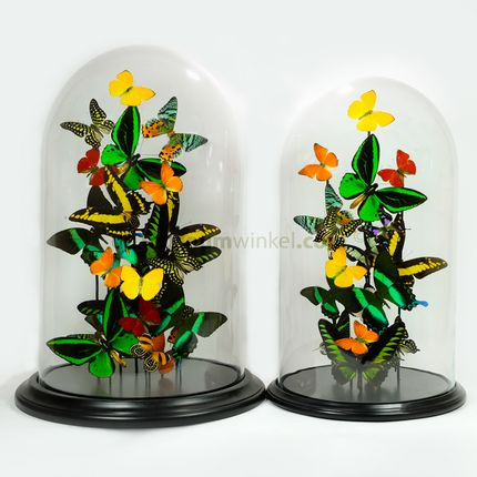 Decorative objects - Tropical butterflydome - DMW.NU: TAXIDERMY & INTERIOR