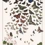 Poster - POSTER I BUTTERFLIES - LES JOLIES PLANCHES