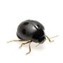 Objets design - Decorative, Ceramic - Ladybirdy, fly, fly - LABORATÓRIO D'ESTÓRIAS