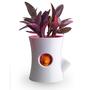 Aménagements - Hill Pot: pot de plantes auto-arrosage en plastique recyclé pour jardin intérieur et extérieur - QUALY DESIGN OFFICIAL