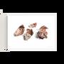 """Art photos - """"Avocado & the Lava"""" / Wall Decor / Giclée print - DOEN STUDIO"""