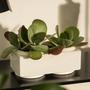 Décorations florales - CONSTANT pot céramique d'intérieur  - D&M DECO