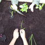 Toys - My First Vegetable Garden - WILL'UP