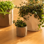 Décorations florales - FAIR pot céramique intérieur - D&M DECO