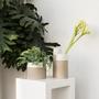 Décorations florales - ICN pot céramique d'intérieur  - D&M DECO