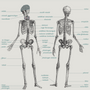 Poster - DISPLAY/ANATOMY - LES JOLIES PLANCHES