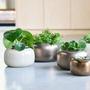 Ceramic - JAR indoor ceramic pot  - D&M DECO