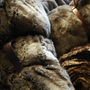 Coussinstextile - Faux Fur Cushions & Throw Collection  - KANCHI BY SHOBHNA & KUNAL MEHTA